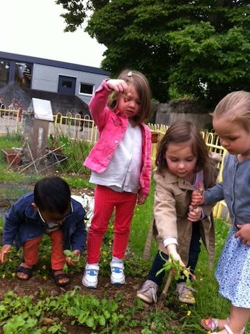 La cueillette des radis