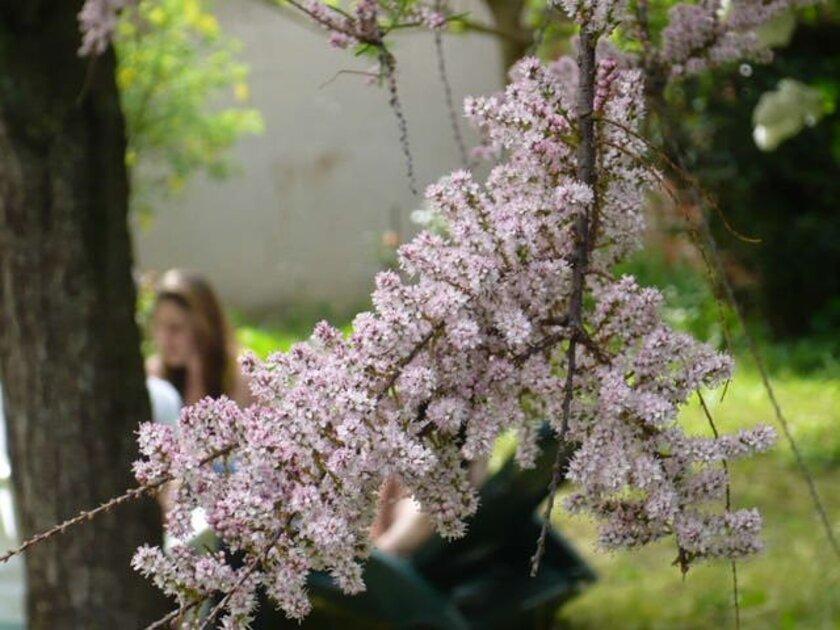meli melo de petites fleurs du printemps au pavillon de mémé