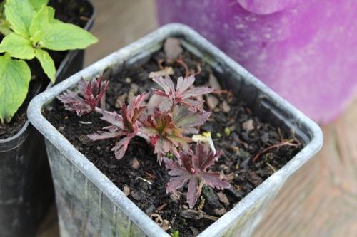 1ère fête des plantes de l'année