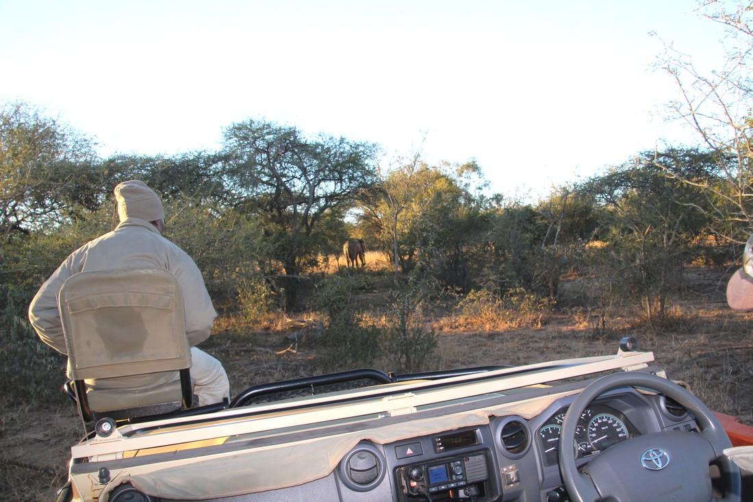 AFRIQUE du SUD : juin 2018 :  3ème safari