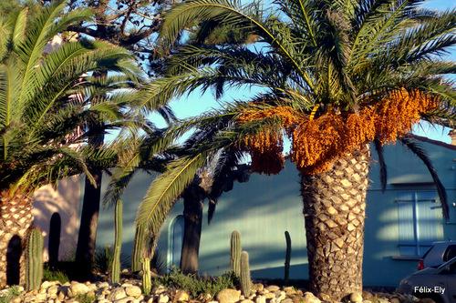 Sous le palmier ...