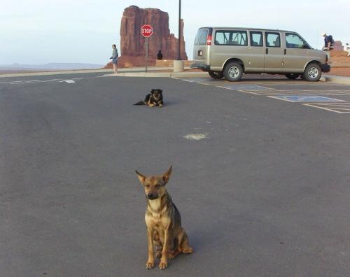 Chiens des Navajos dans Monument Valley