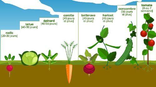 PDF Jardinage