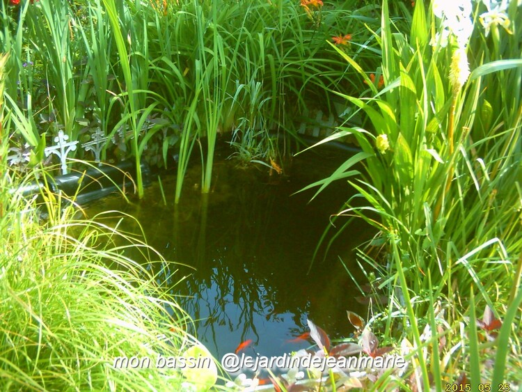 mon bassin aquatique 2015