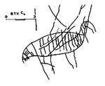Animal indéterminé-Tune de la Varaime-peut être protégé par Copyright ou autre.