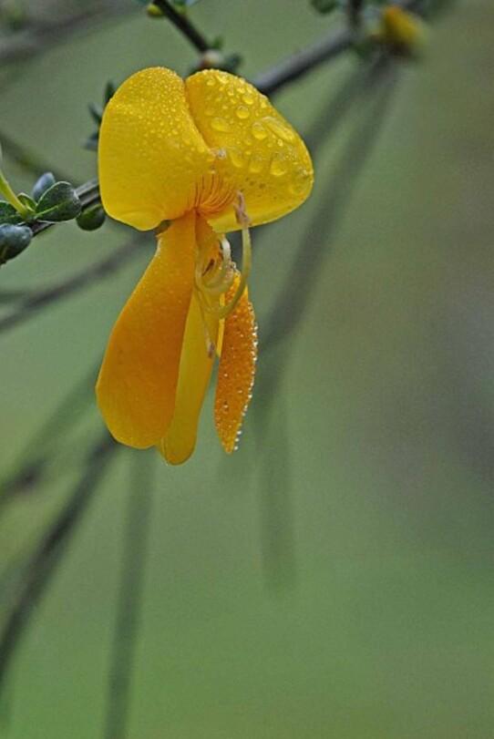 Fleurs-12-0667--2-.jpg