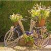 bicyclette fleurie au jardin