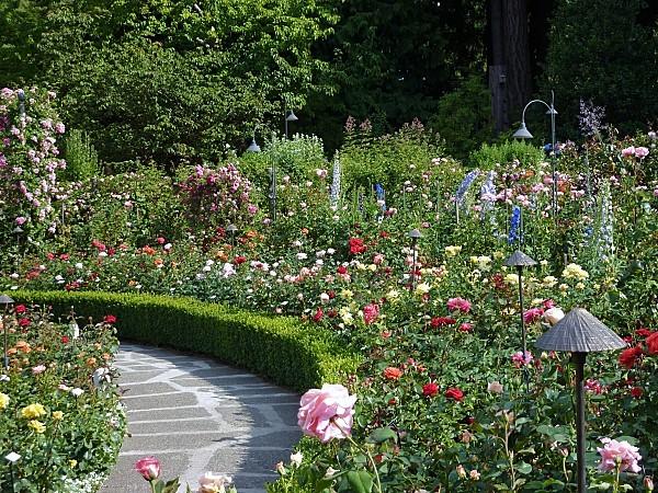 Jour 24 Butchart Gardens roses
