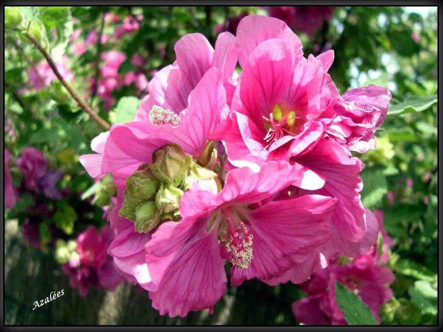 « Faune et Flore »