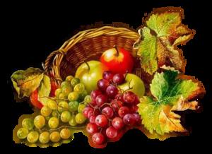 Les fruits en abondance