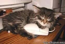 Blague : Ce sont 3 petites souris marseillaises ....