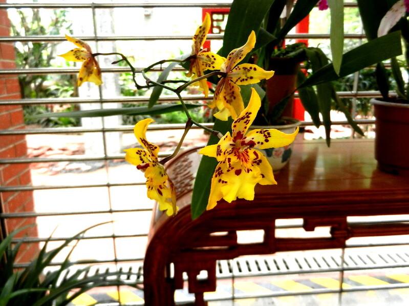 LE JARDIN DES ORCHIDEES A GUANGZHOU MAI 2014