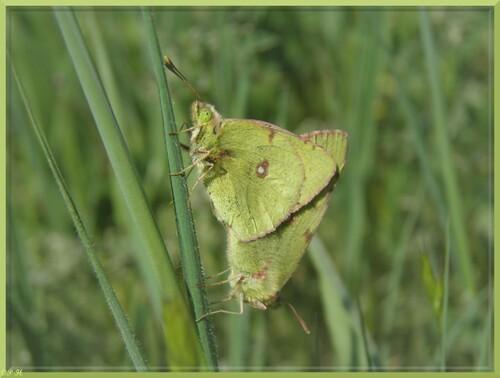 Printemps pour les Papillons