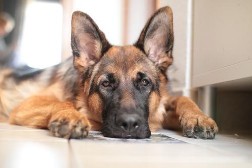 Mémoire de chien...