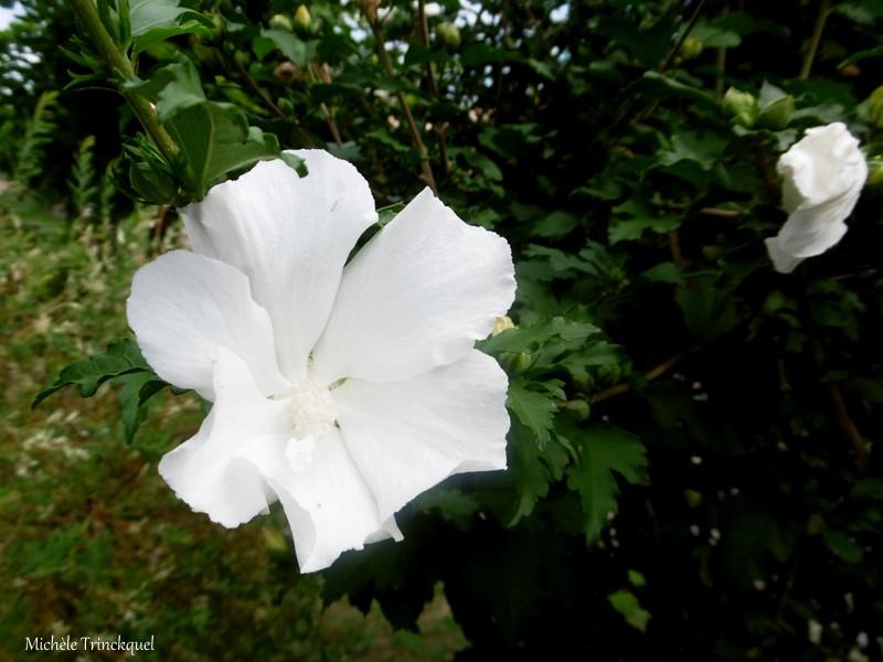 Des fleurs dans mon village, le 20 août...