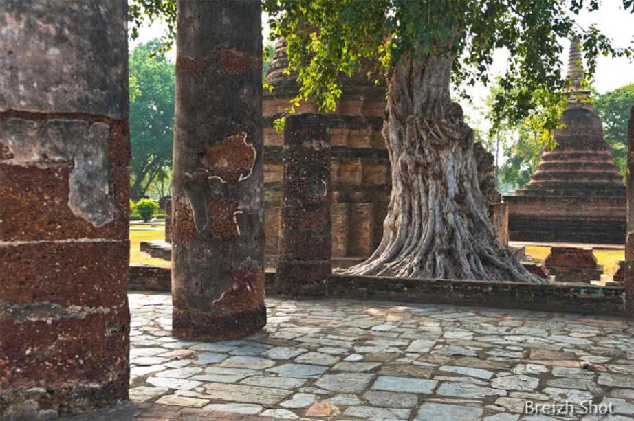 Wat Mahathat - Sukhothaï :  Les piliers du vihara