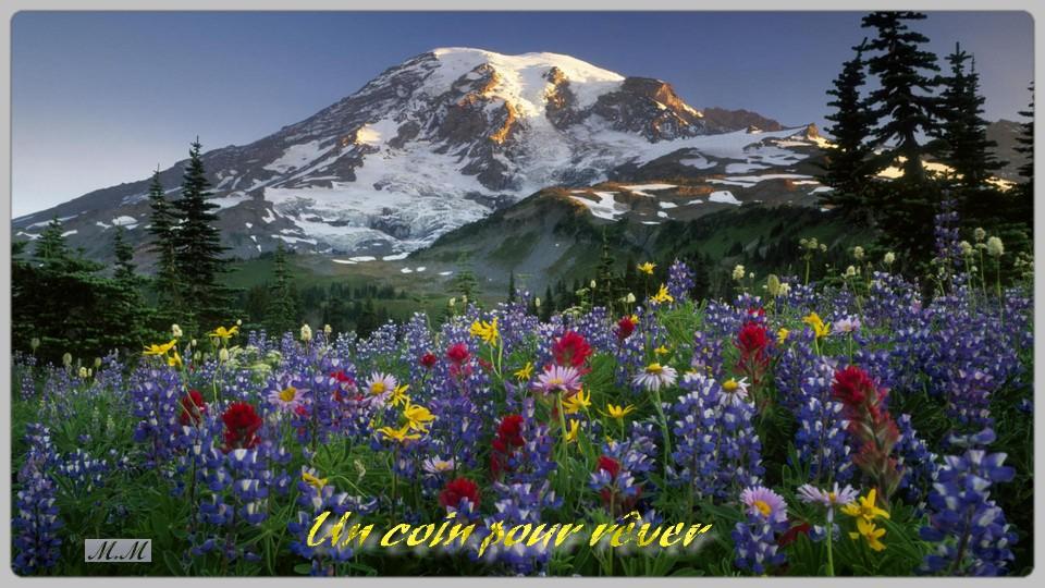 Champ de fleurs en montagne