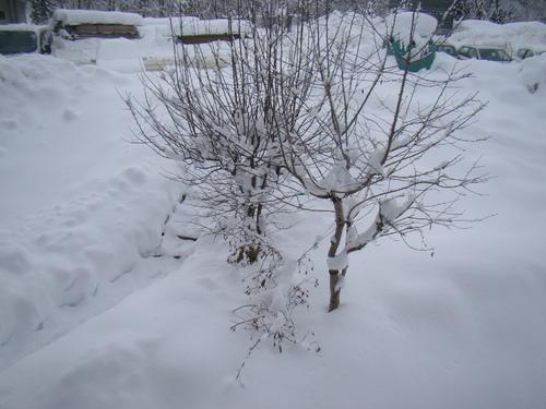 coucou du dimanche neige neige !!!!
