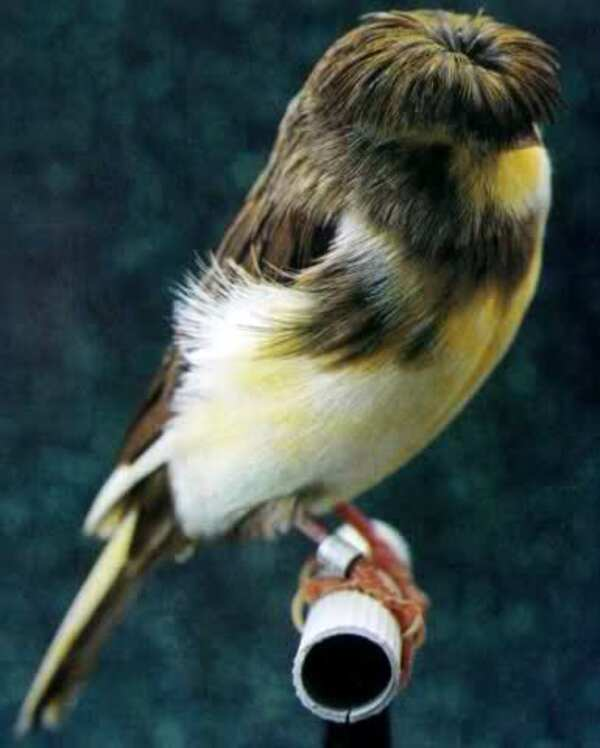 J'aime ces doux oiseaux