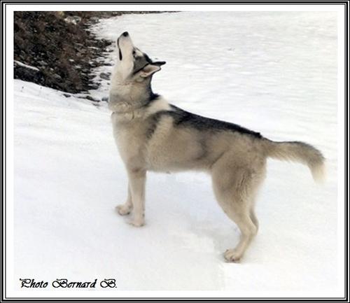 Kiska (11 mois)