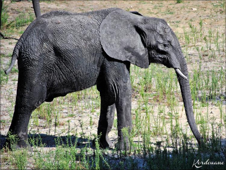 Photos Eléphants d'Afrique - Zoo Arcachon