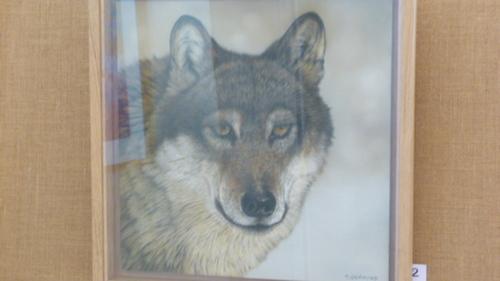 le loup nous regare avec intérêt