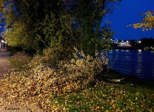 Les dégâts de la neige du 14 novembre dernier : des milliers d'arbres touchés