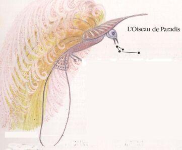 IV - Armure de l'Oiseau de paradis (Apus Cloth)