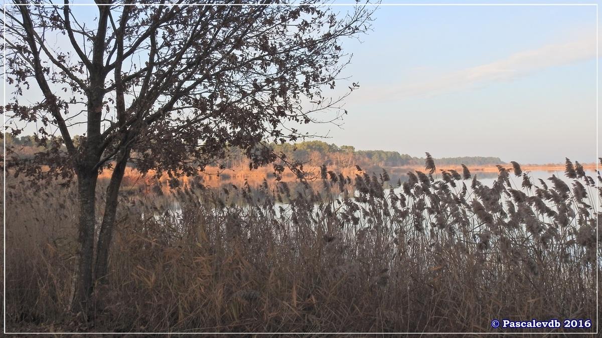 Fin du jour sur l'étang de Cousseau - Décembre 2016