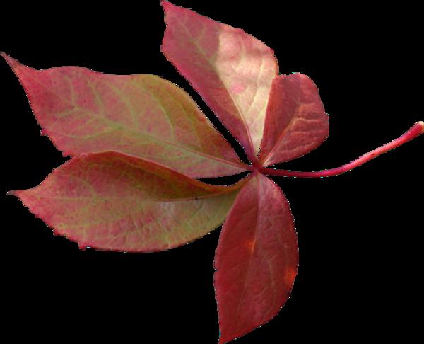 Feuilles d'automne 1