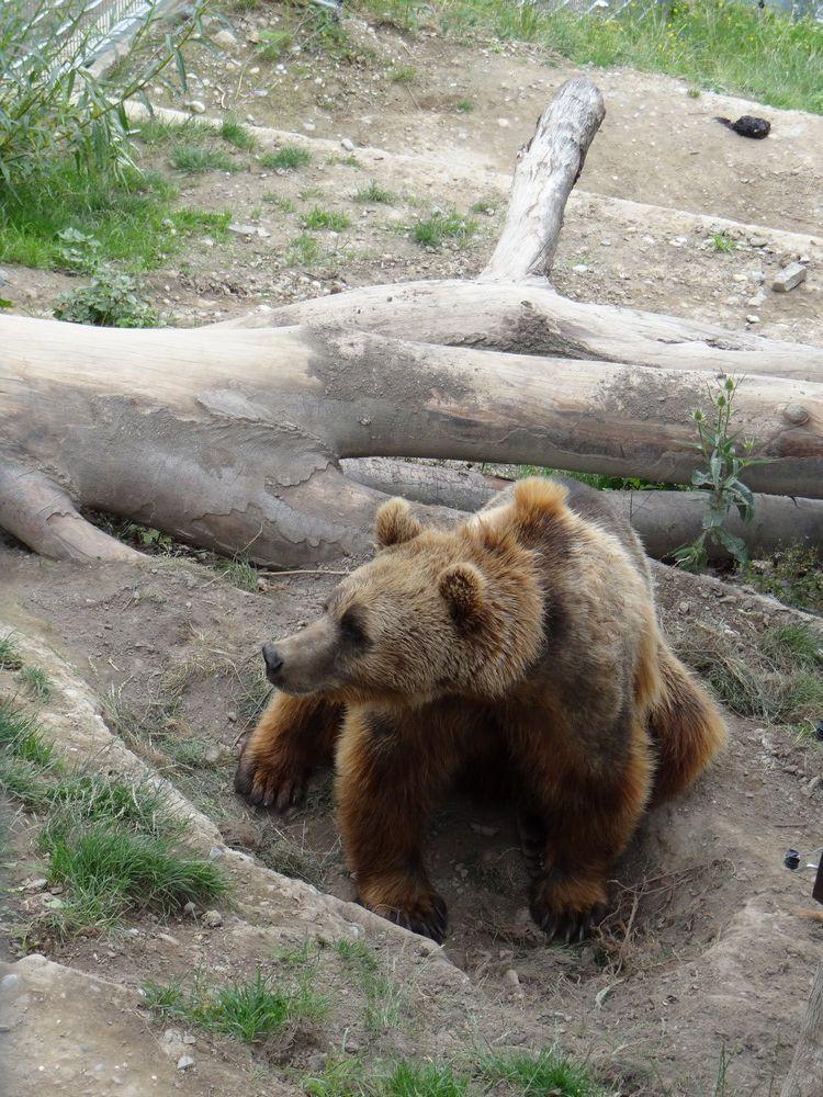 Berne et les ours...