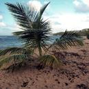 Essai de plantation pour retenir le sable - Photo : Michaël