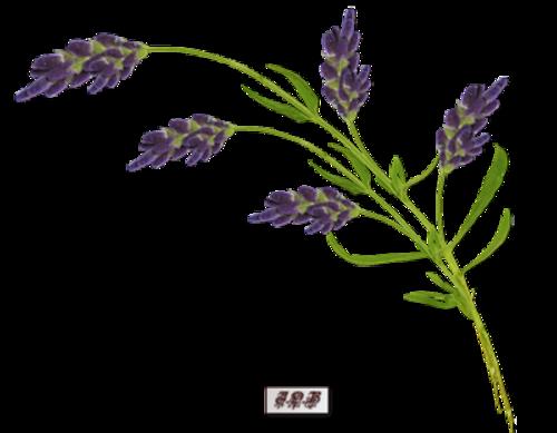Tubes : Branche fleurie
