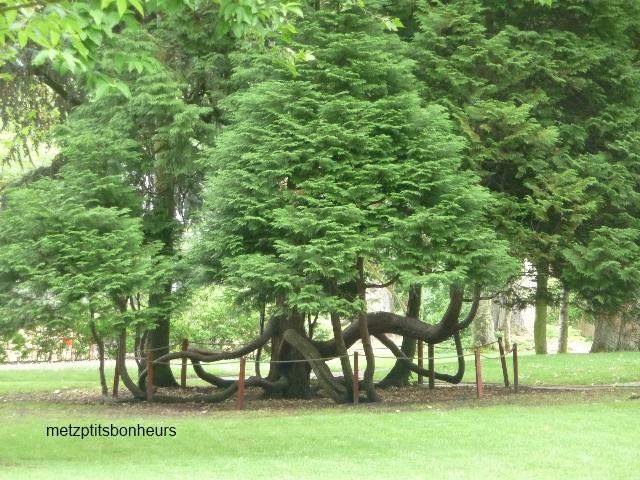 """Ce sont """"mes arbres""""!"""
