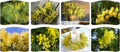 Cartonnettes Mimosa !