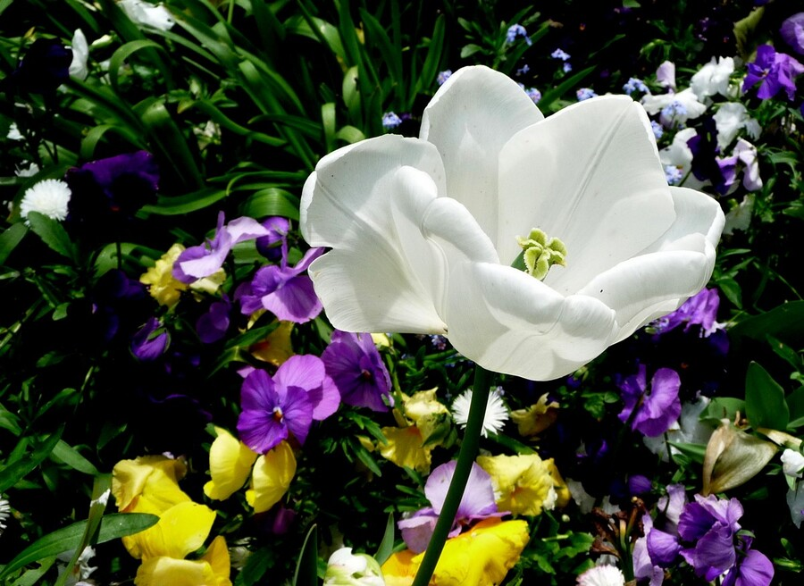 Anniclick.Fleurs.05.2013