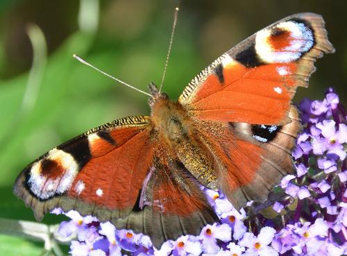 La papillon sous la main