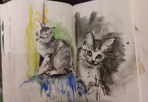 Croquis chats
