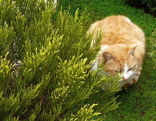 Titemine, chatte de jardin...