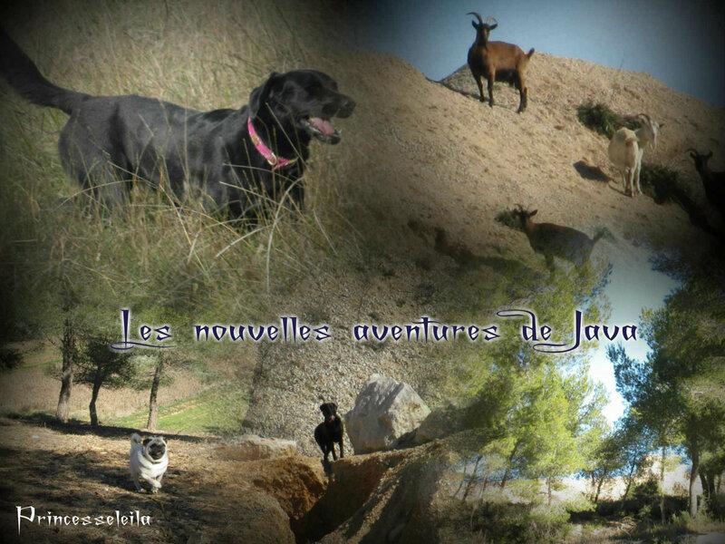 A la rencontre des chèvres sauvages du Rove beh!!