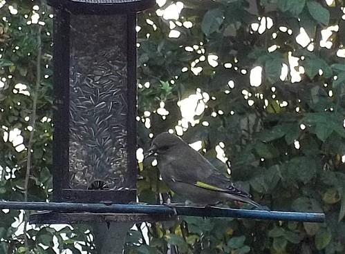 oiseaux-du-ciel-235.JPG