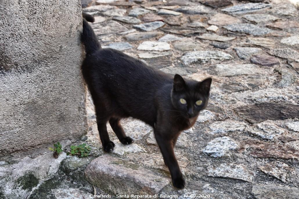 Miaou, miaou - Santa-Reparata-di-Balagna  -  Corse