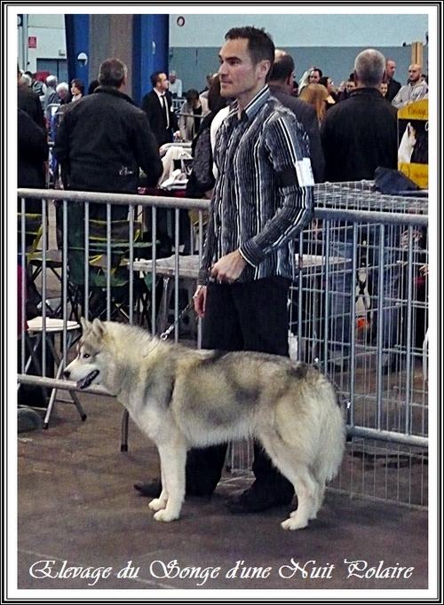 Iroko Exposition canine de Toulouse (23 février 2014)