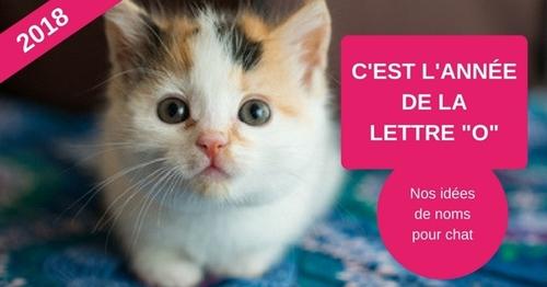 C'est l'année de la lettre O pour les noms de chat