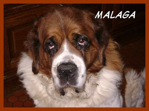 malaga2.jpg
