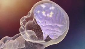 Résultats de recherche d'images pour «cerveau de l'enfant»