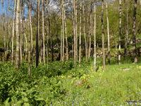 jardin de Los Masos de Valmanya