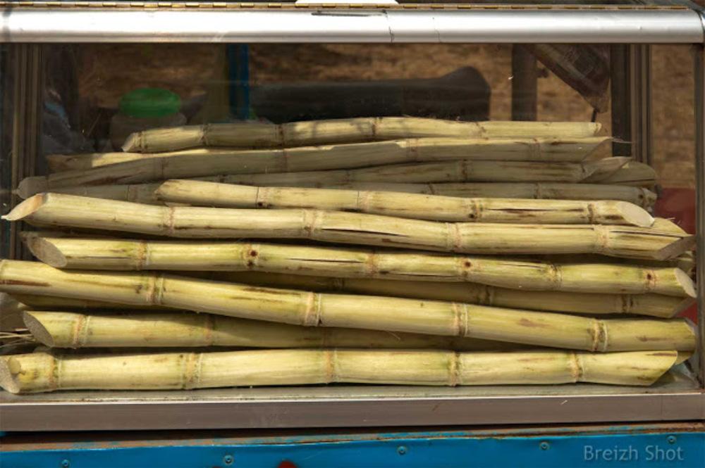 Bâtons de canne à sucre