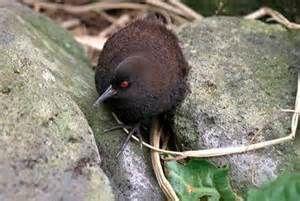 Ce petit oiseau qui ne vole oas ...