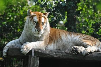 Zoo olmen 2014 200